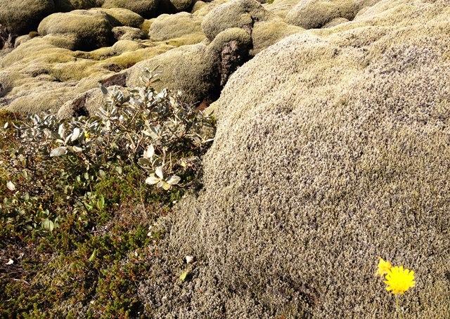 Closeup lava field